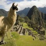 Machu Picchu mit Lama; Bild von Promperu