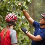 Radfahrer auf Kaffeeplantage in Costa Rica