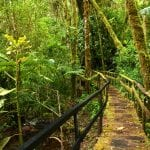 Holzsteg im dichten Regenwald in Costa Rica