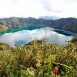 Kraterlagune Quilotoa mit Blumen im Vordergrund