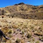 Radpause im Tal der Puya di Raimondis Panorama-Perspektive