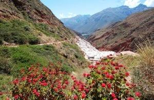 Salzminen von Maras im Hintergrund eingebettet in steile Bergketten vor roten Blumen