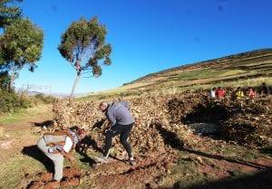 Unsere Gruppe hilft bei der Feldarbeit und beim Acker umpflügen, im Hintergrund Dorfbewohner bei der Maisernte