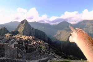 Machu Picchu, im Vordergrund Alpaka, das in Richtung der Tempelanlage blickt