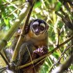 Tiere / Affen / Amazonas