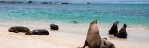 San Cristobal Galapagos in Ecuador