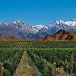 Weinanbau im Nordwesten Argentiniens.