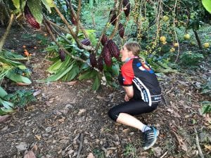 Kakaobohne wächst am Baum