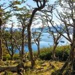 Blick vom Wald auf die Wulaia Bucht