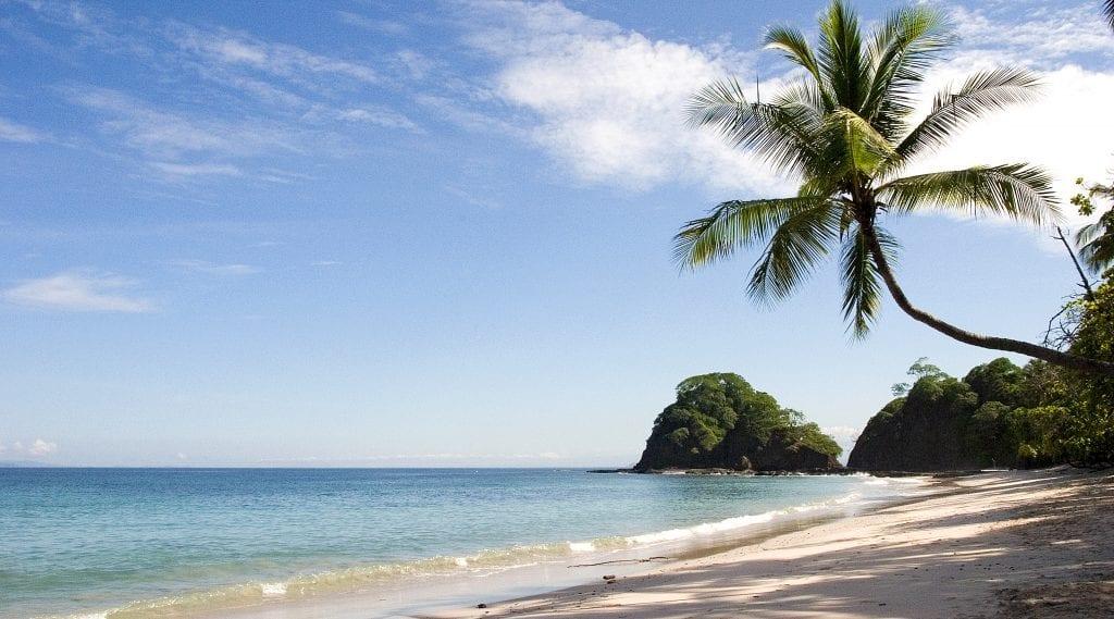 Karibikstrand mit Palme